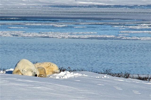Tundra_climate