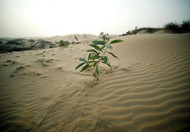 plant-in-desert