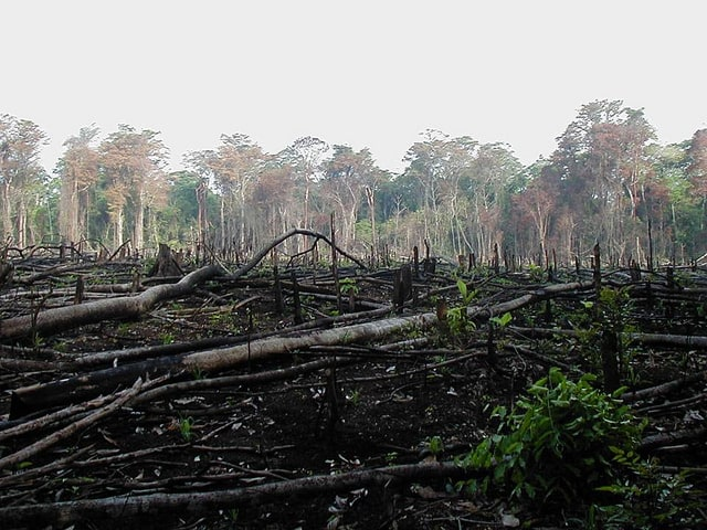 Deforestation_environmental_concern