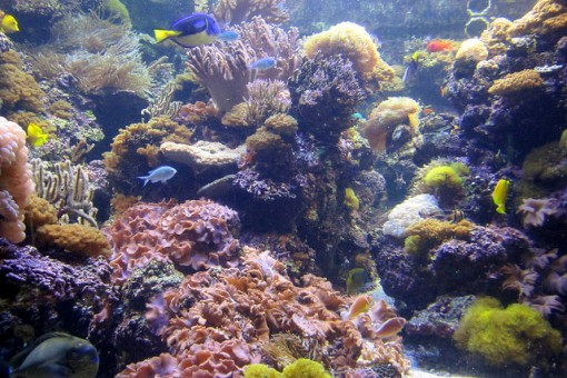 pacific-coral-reef