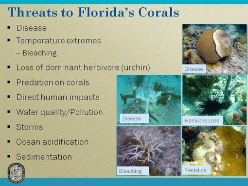 threat-florida-corals