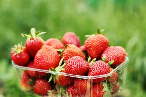 strawberries-in-organic-farm
