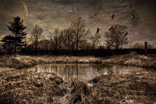 wetland-pond