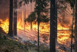 wildfires-fires-bushfire-forest