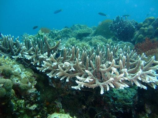 coral-bleaching-2