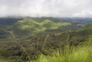 grassland-biome