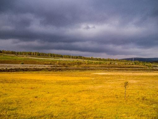 grassland-biome1