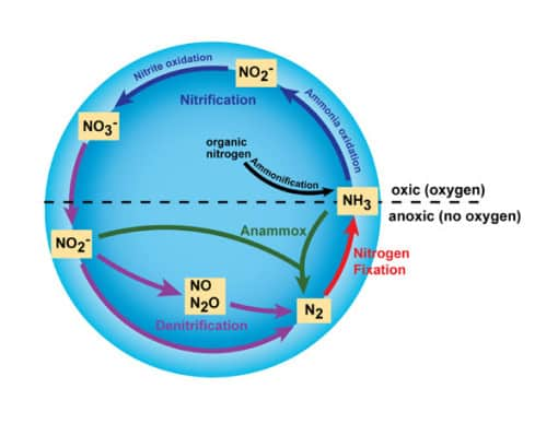 the nitrogen cycle conserve energy future