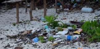 Plastic bottles lying on a beach