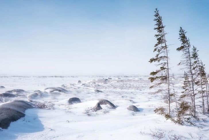 coldest-tundra-biome