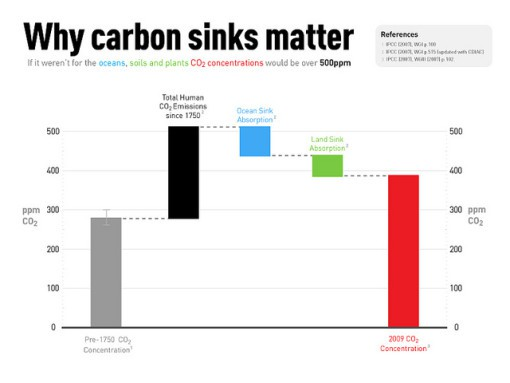 What Are Carbon Sinks Conserve Energy Future