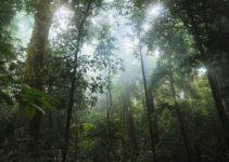Tropical Rainforest Biome: Location, Temperature, Precipitation, Plants and Animals