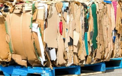 Is Cardboard Biodegradable? (And Good For the Soil?)