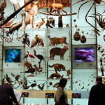 biodiversity-mounted-on-a-wall