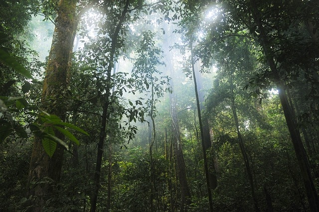 a look at popular rainforests in the world Tropical forests in our daily lives  the world's most popular fruit,  and they maintain some of the world's most fragile soils rainforests also act as the.