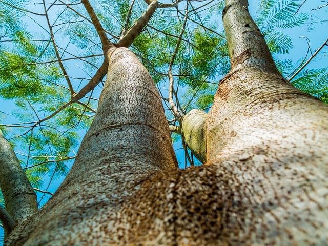 log-tree-bark-aesthetic