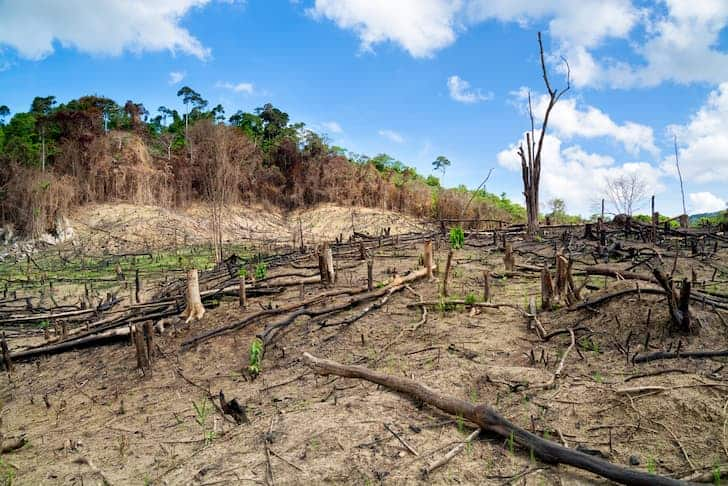 photo-deforestation-in-the-philippines-logging