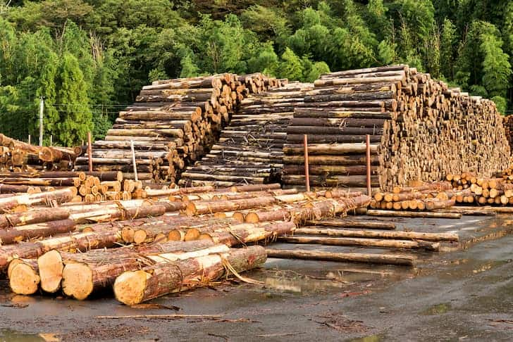 photo-pine-timbers-stacked-at-lumber-deforestation