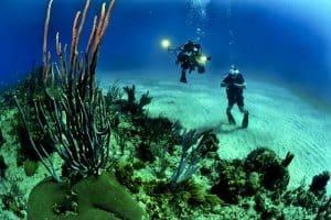 divers-scuba-reef-underwater-sea-coral-reef