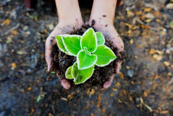 small-plant-soil-growing-in-hand