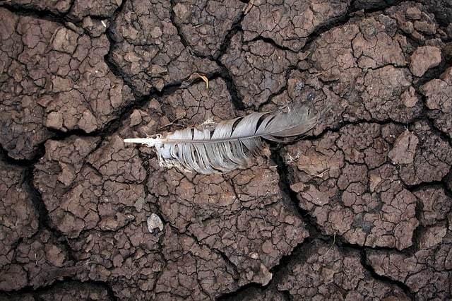 drought-mud-feather-dry-nature-soil-erosion