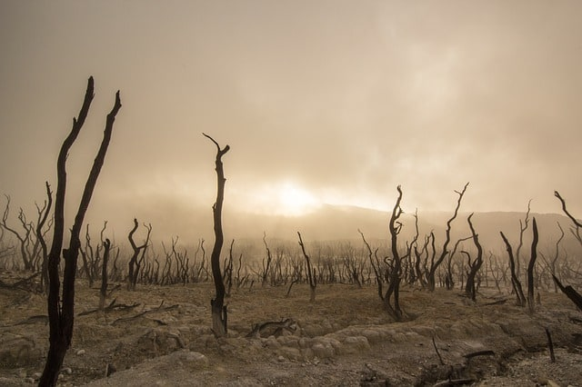 dead-trees-dry-deserted-dead-wood-environmental-disaster
