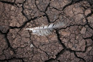 drought-mud-feather-dry-nature-environmental-disaster