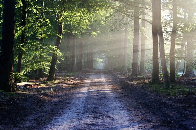 road-sun-rays-path-forests-nature