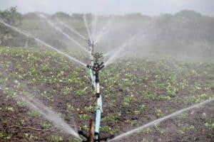 irrigation-agriculture-sprinkling