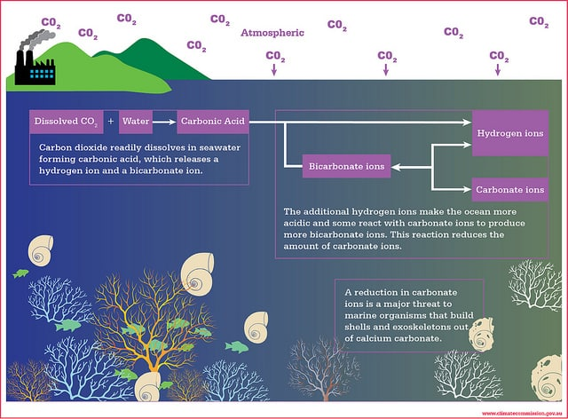 ocean-acidification-graphic