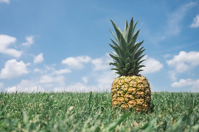 pineapple-field-hospitality-welcome-organic-farming