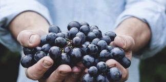 grapes-bunch-fruit-person-holding-organic-food