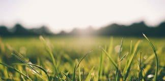 grass-morning-dew-nature-green