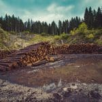 forestry-logging-deforestation