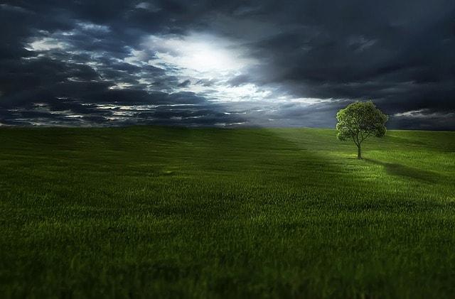environment-nature-tree
