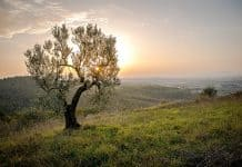 landscape-tree-sunset