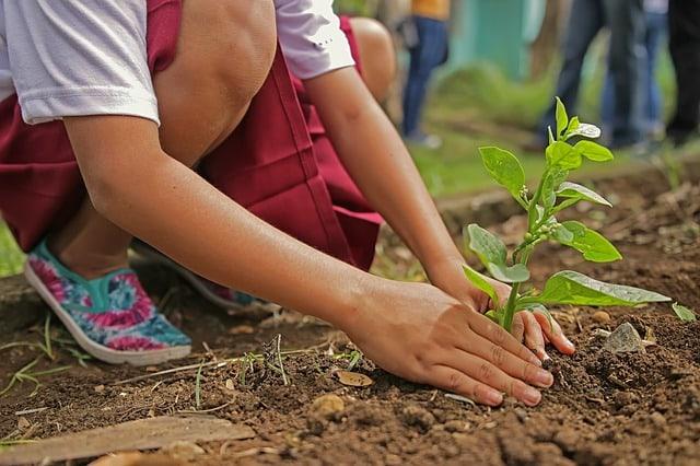 planting-environment-nature-botany