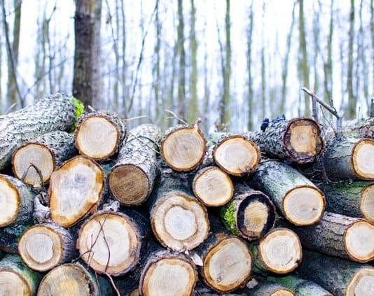 bark-brown-cut-daylight-tree