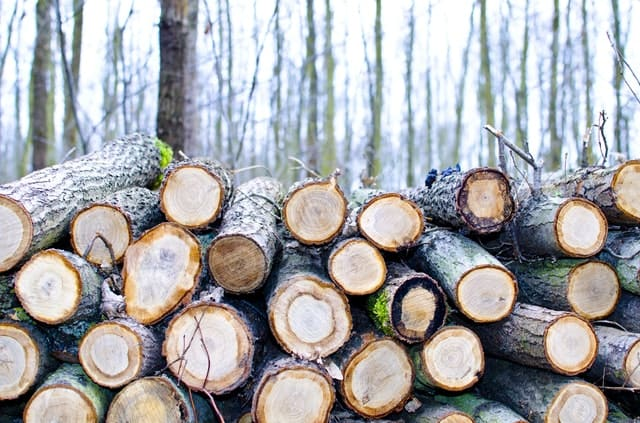 Causes, Effects and Solutions of Illegal Logging