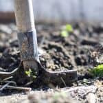 agriculture-backyard-blur-close-up