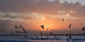 flock-of-white-birds-photo-during-sunset