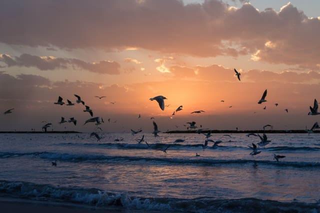 flock-of-white-birds-photo-during-sunset
