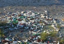 bottles-dump-floating-garbage