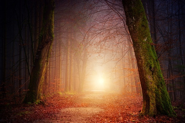 nature-wood-tree-light-sun-fog
