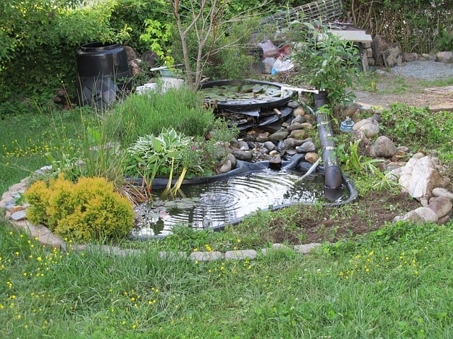 pond-backyard-garden-water-green