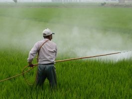 herbicide-avignon-in-rice-field