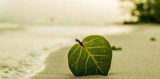 green-leaf-on-beach