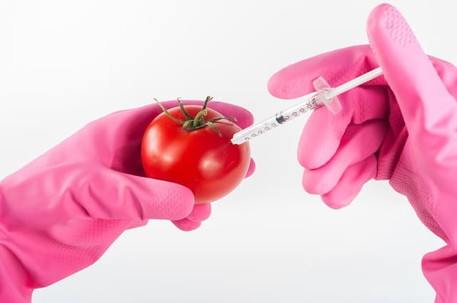 modified-tomato-genetically-food