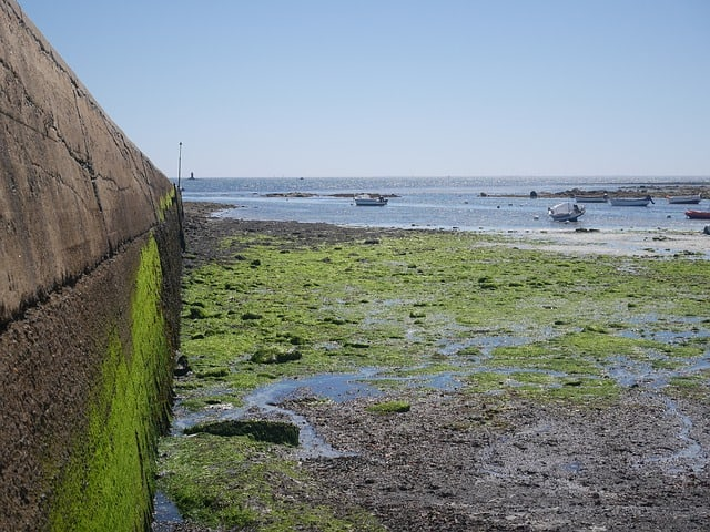algae-green-pier-sea-port-summer