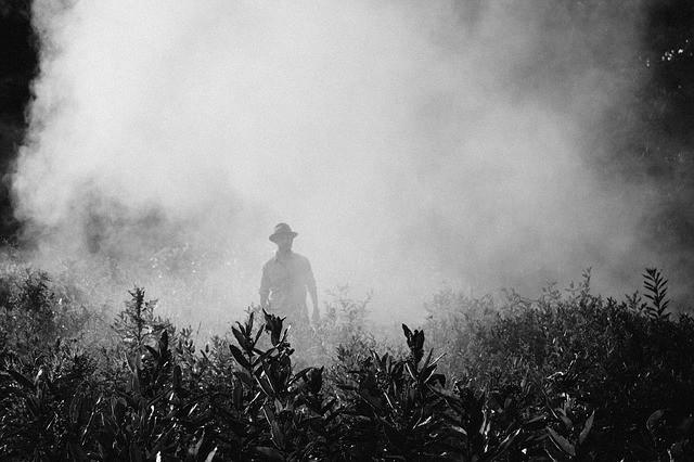 fog-steam-person-farmer-spraying